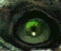 EyeDontKno