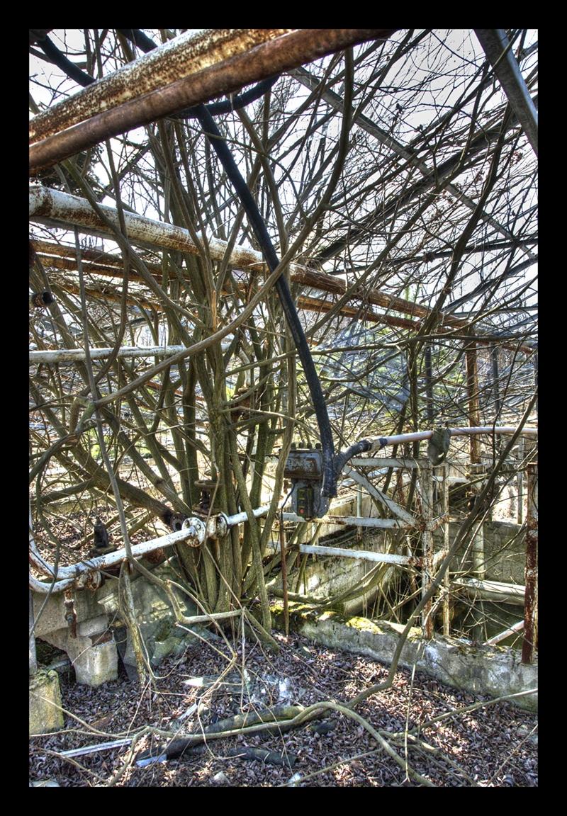 Greenhouses III